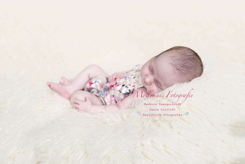 Mollemans Fotografie newborn helmond