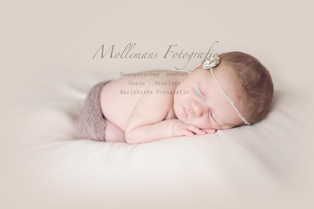 www.mollemansfotografie.nl , mollemans fotografie, newborn, noord Brabant, regio Eindhoven